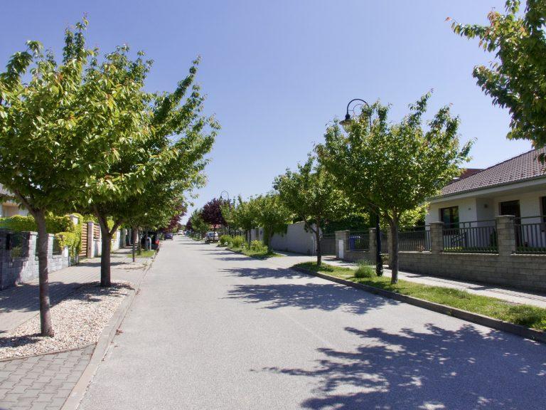 Projekt plný stromov